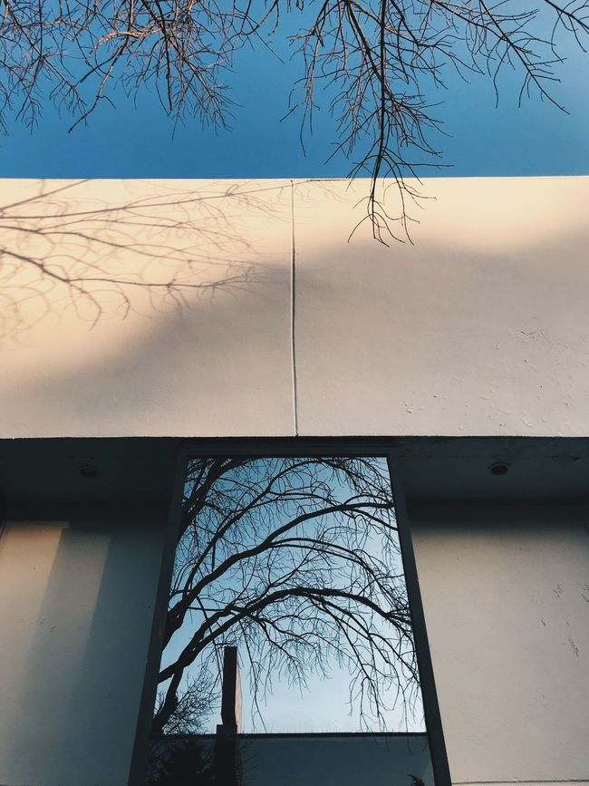 The reflection of nature Perspectives On Nature Bare Tree Tree Day No People Branch Low Angle View Outdoors Nature Sky Architecture Beauty In Nature Clear Sky Autumn Fall