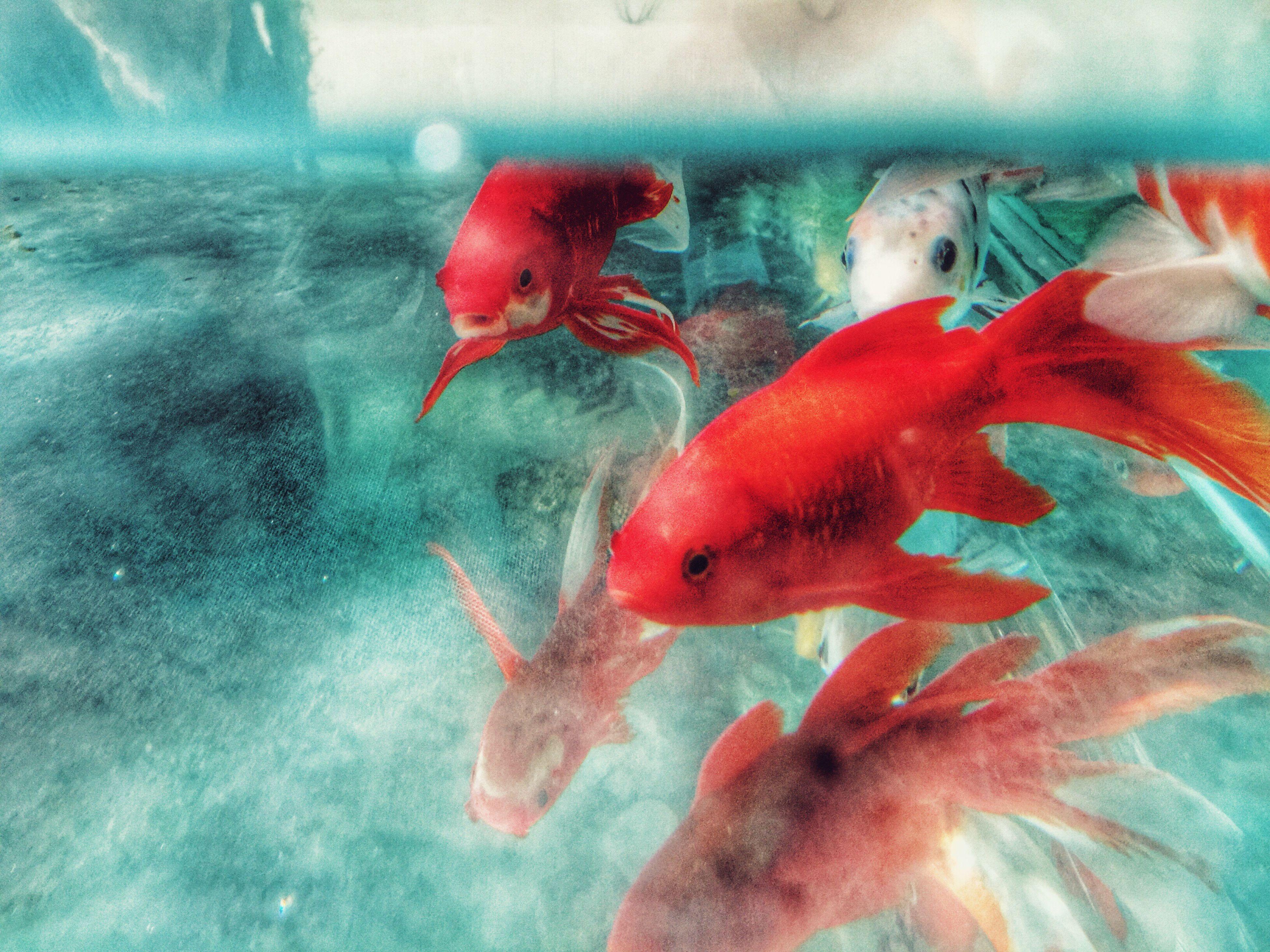 漂浮flotage Flotage Check This Out Fish Enjoying Life Streetphotography Beijing, China Parrotsofinstagram Photography Nature Photography Happyday Somethingdifferent EyeEm Nature Lover Hanging Out Animals
