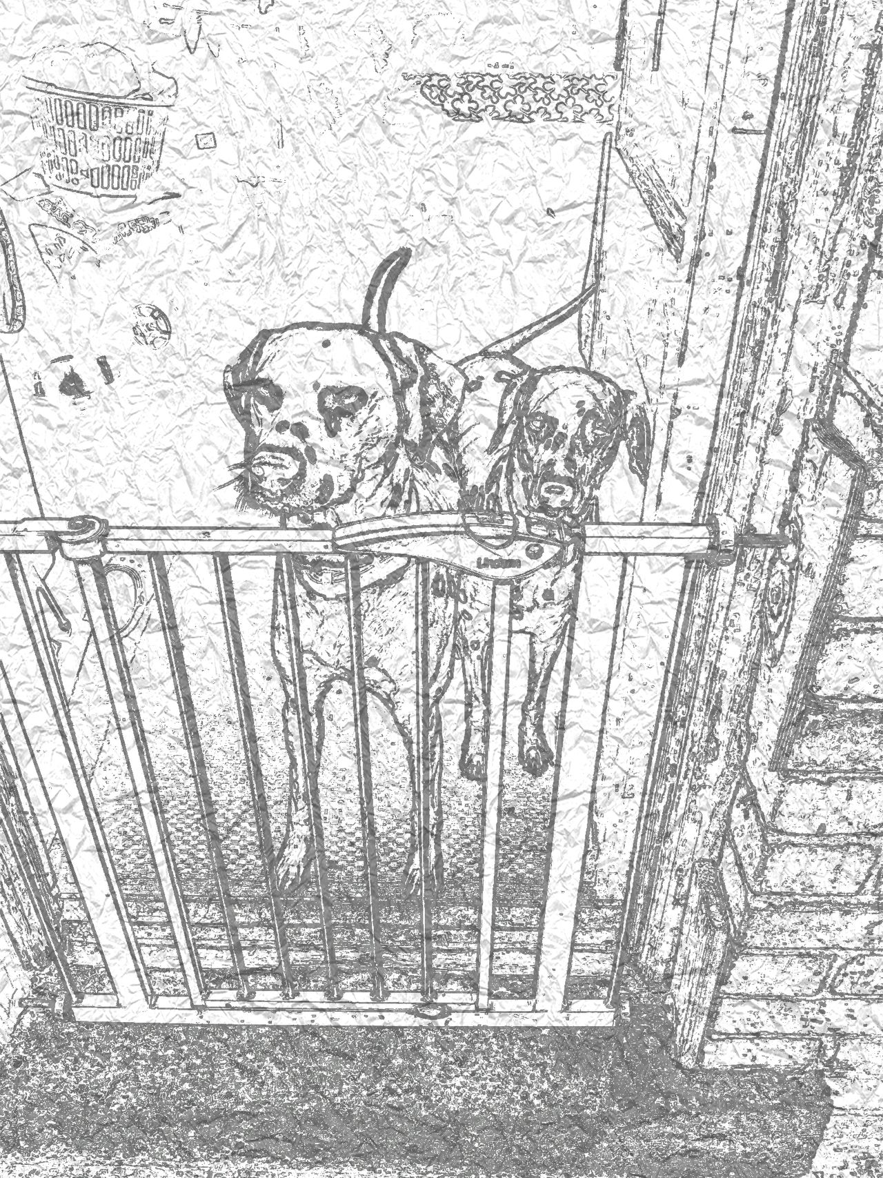 Dalmatian dogs standing in doorway behing babygate Close-up No People Day Dogs Life Dalmatian Spotty Dog! Pencil Art Sketching Male Female Bıtch Stud Mummy And Daddy Love Doorway Baby Gate
