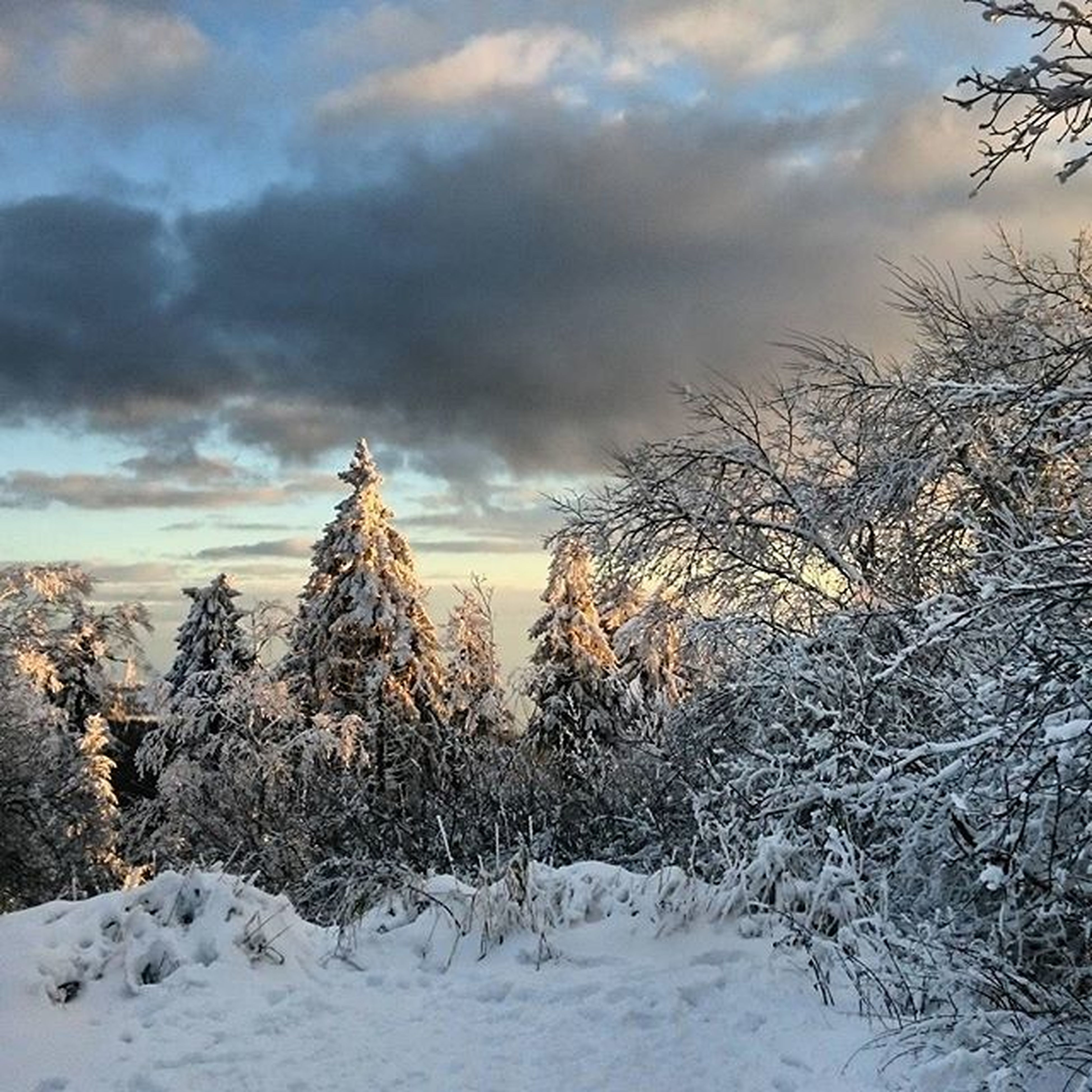 snow, sky, winter, cold temperature, cloud - sky, weather, cloudy, tranquility, tranquil scene, season, scenics, landscape, nature, beauty in nature, covering, cloud, tree, field, non-urban scene, overcast