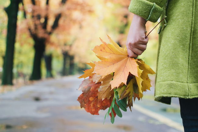 Autumn Beauty In Nature Change Close-up Day Focus Object Focus On Foreground Hand Herastrau Park Leaf Maple Leaf Nature Outdoors Part Of Tree