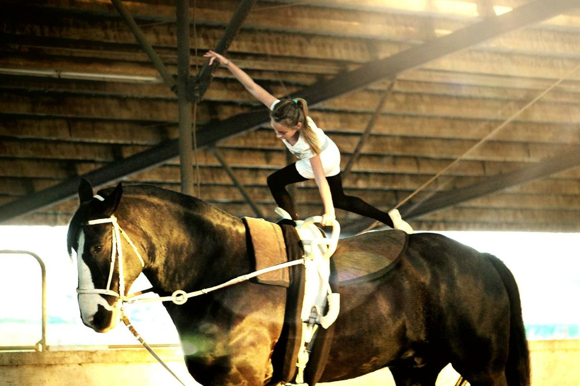 Horse Horseback Riding Mammal Animal One Person Riding Domestic Animals Horses Horsevaulting Horse Riding Strength Gymnastics Child Sunlight Fun Finding New Frontiers