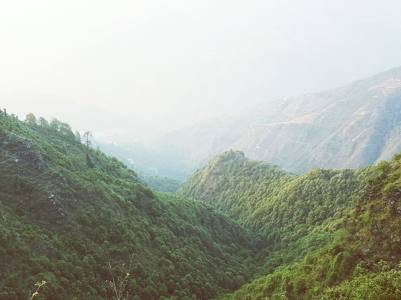 Mountain Greenery India Mussoorie