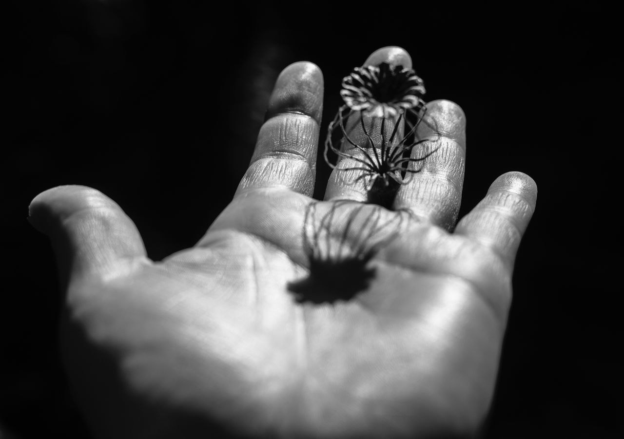 Human Hand Human Body Part Human Finger Close-up Women One Person Indoors  People Adults Only Adult Day Nature Holding Focus On Foreground Poppy Pod Decay Black & White Seedpod Light And Shadow
