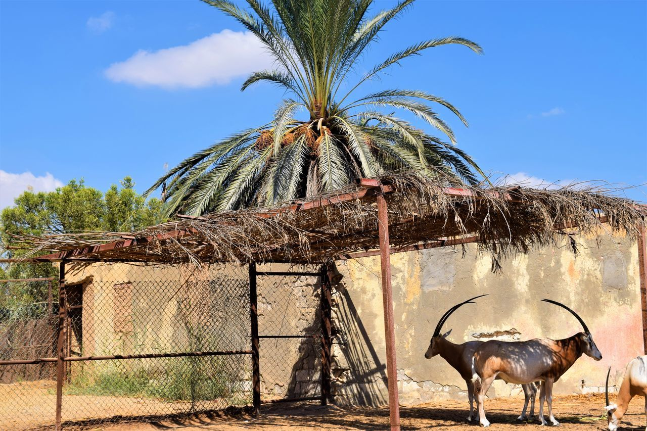 Africa African Safari Animal Themes Beach Day Domestic Animals Donkey Gazelle Mammal National Park No People Outdoors Palm Tree Pattern Sky Tree Zoo EyeEm New Here EyeEm Gallery