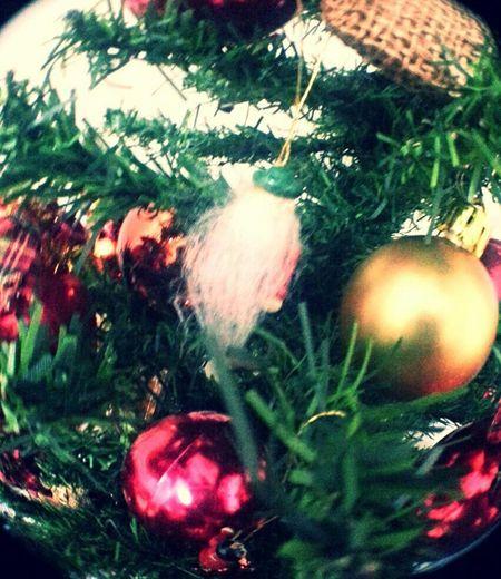 Eyeem Natal Merry Christmas My Cristhmas Tree