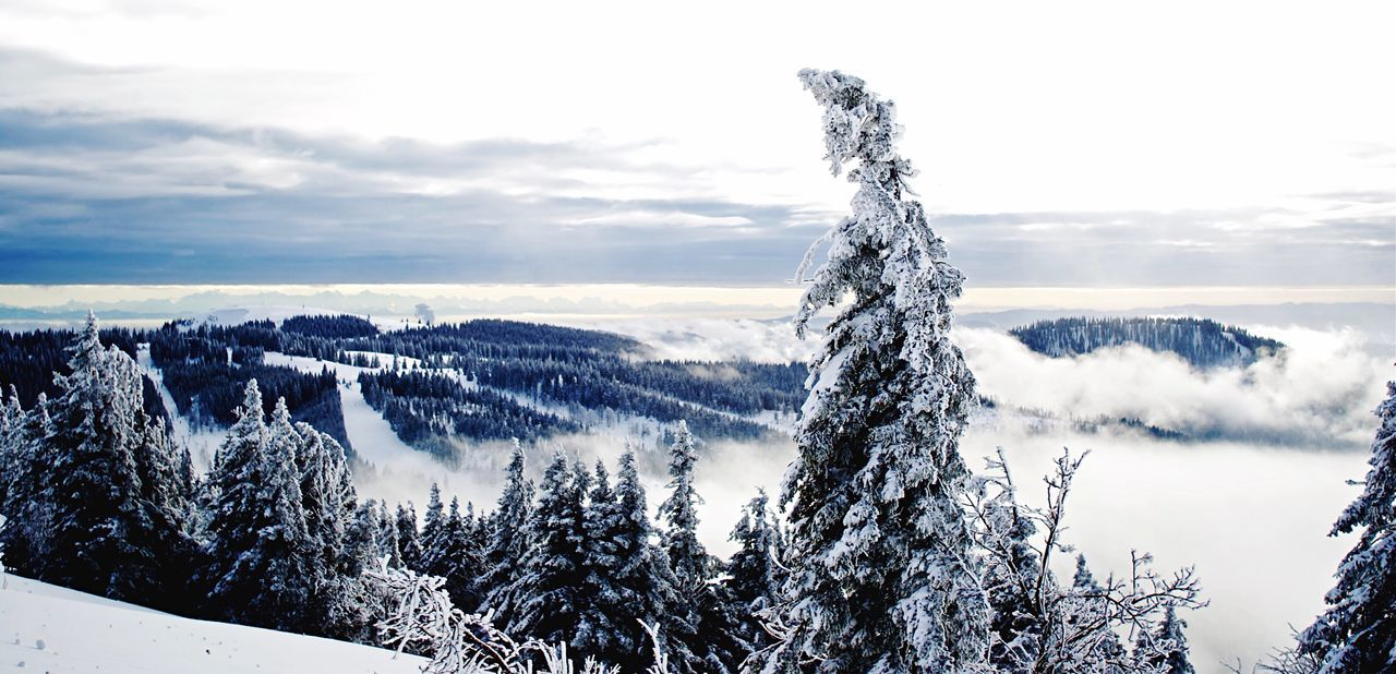 Ice Age Snow Scenics Beauty In Nature Winter Season  Landscape Mountain Feldberg EyeEm Best Shots EyeEm Nature Lover EyeEmBestPics EyeEm Best Shots - Nature