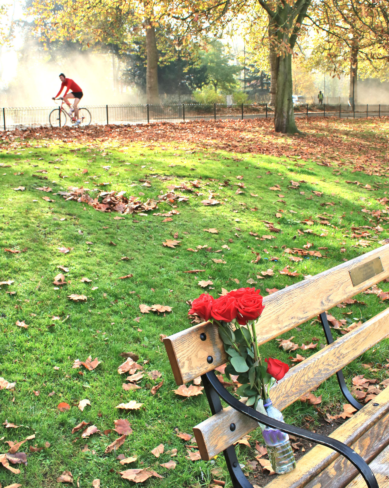 Battersea Park Bicycle Cycling Cyclist In Red Flowers On A Bench In Memorium Late Autumn London Parks Lost Loved One Nature Outdoors Park Bench Red Flowers Red Roses In A Bottle Red Roses🌹 Remebrance Remember Remembering You Sorry Tree