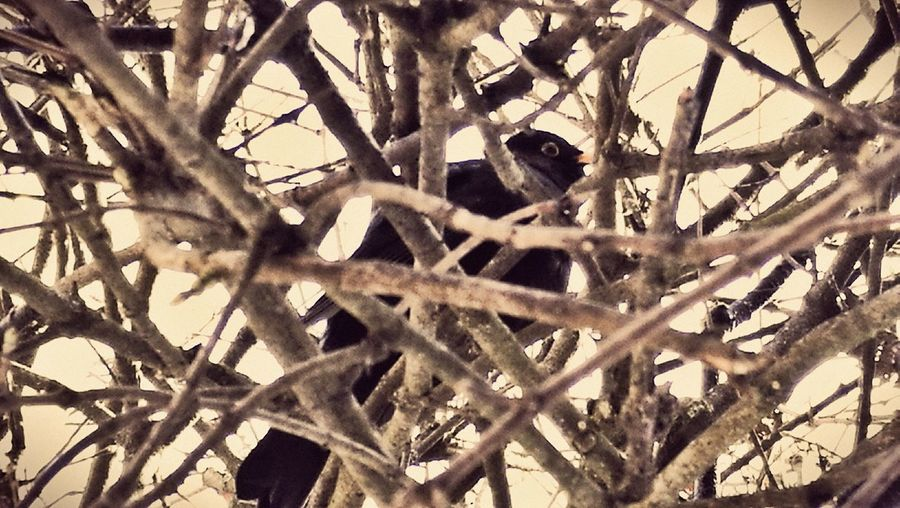 EyeEm EyeEm Nature Lover Blackbird Blackbird In Tree Tree Nature Naturelovers Beauty In Nature Full Frame Backgrounds No People Pattern Close-up Outdoors Day Fragility Animal Themes Animals In The Wild One Animal Branch Animal Wildlife Bird