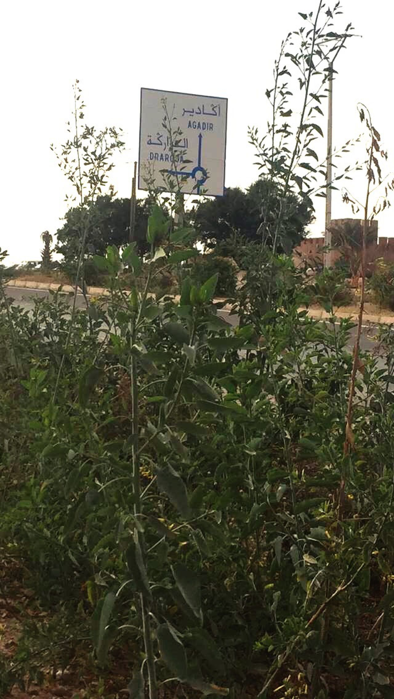 Adapted To The City Communication Text Information Sign Plant Sign Green Color Leaf Growth Road Sign Guidance No People Nature Outdoors Low Angle View Signboard Tree Day Sky Exit Sign Agadir Morocco Agadir
