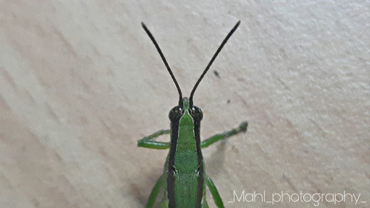Greeninsect Green Leaves Greenhouse Greenland Green Color Mahico Mahidol University Insect One Animal Animal Themes Animals In The Wild Green Color Close-up Nature No People Beauty In Nature Outdoors Day