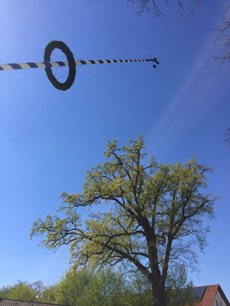 low angle view, day, blue, tree, outdoors, no people, clear sky, sky, nature