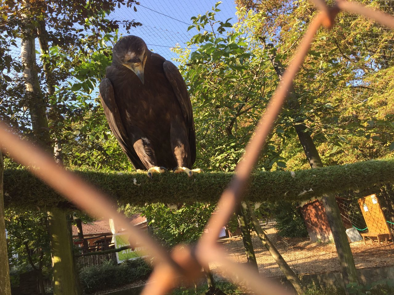 Eagle FlyLikeAnEagle Trapped Bird Never Flying In The Nature Anymore Prisone Sad But Strong PalaPhoto Budapest Budapest, Hungary Hungary