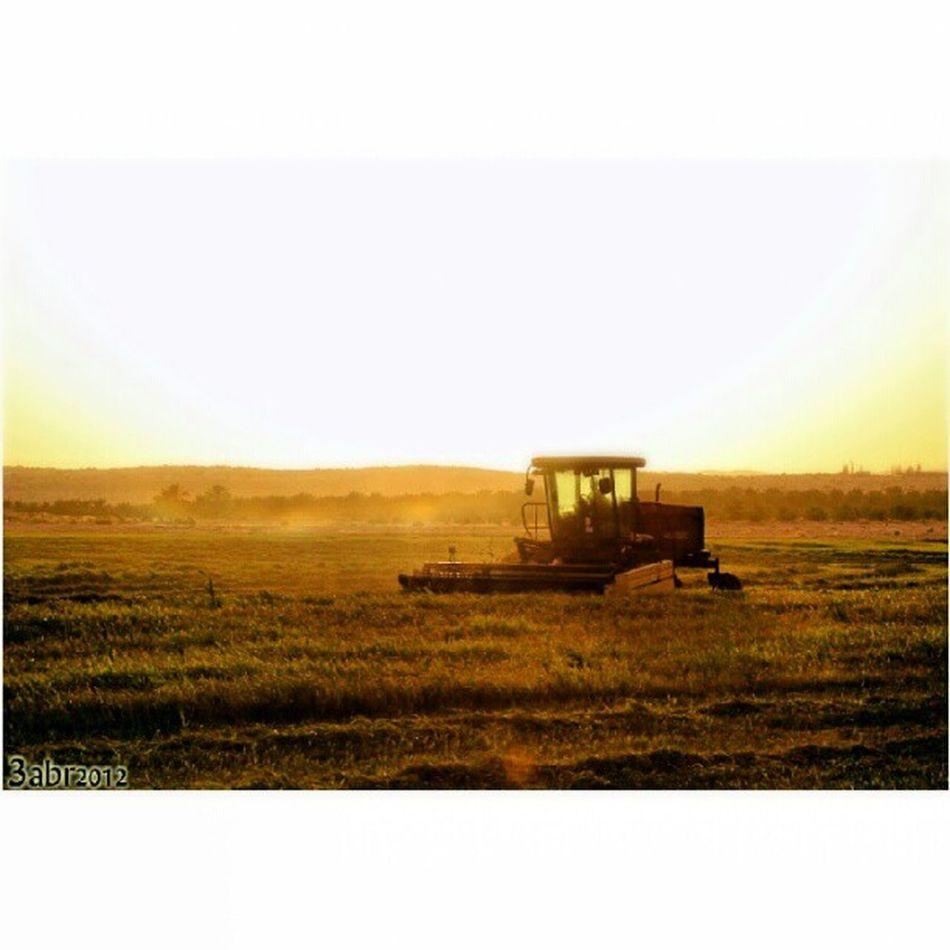 صورة حصادة الزرع مزرعة السلمان بجوار الربيعية في القصيم كاميرة كانون عدسة زوم Combine image transplant Salman farm next spring in Qassim camira Canon zoom lens, 2012