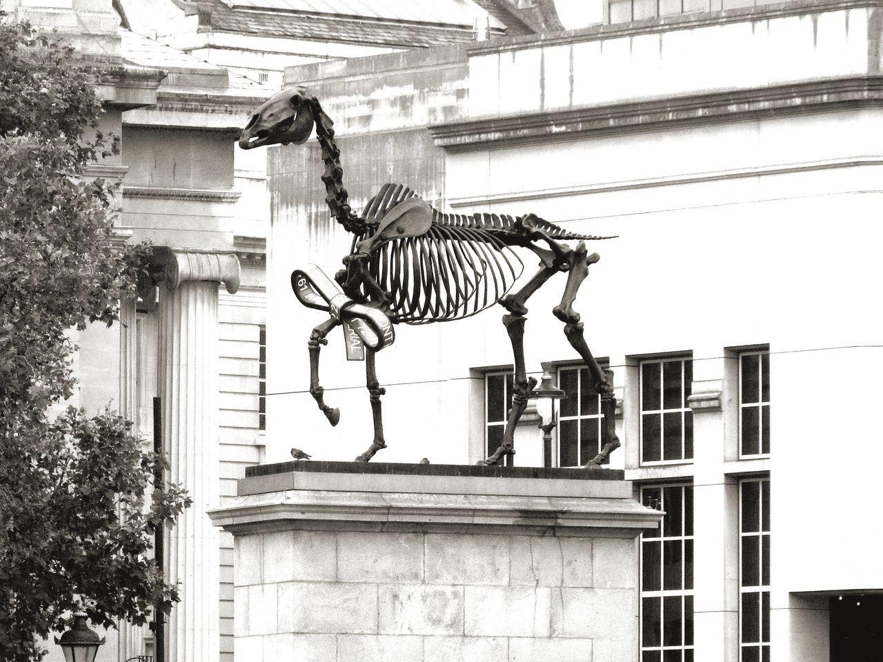 Dinosaur Skeleton Sculpture Westminster London Rainy Day Black & White Outdoors Day EyeEmNewHere