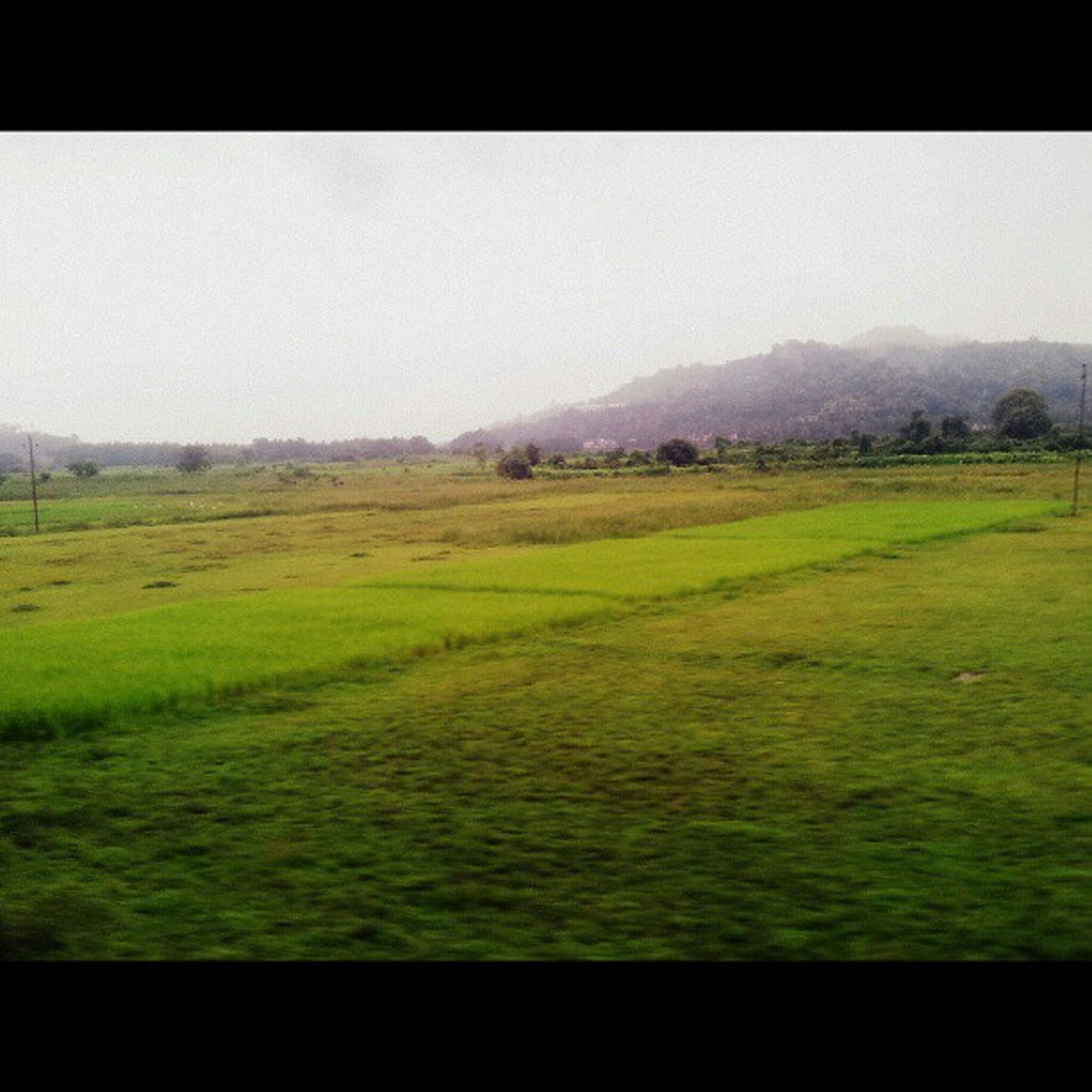 landscape, clear sky, field, tranquil scene, grass, copy space, tranquility, transfer print, scenics, beauty in nature, nature, auto post production filter, green color, rural scene, grassy, horizon over land, no people, idyllic, growth, outdoors