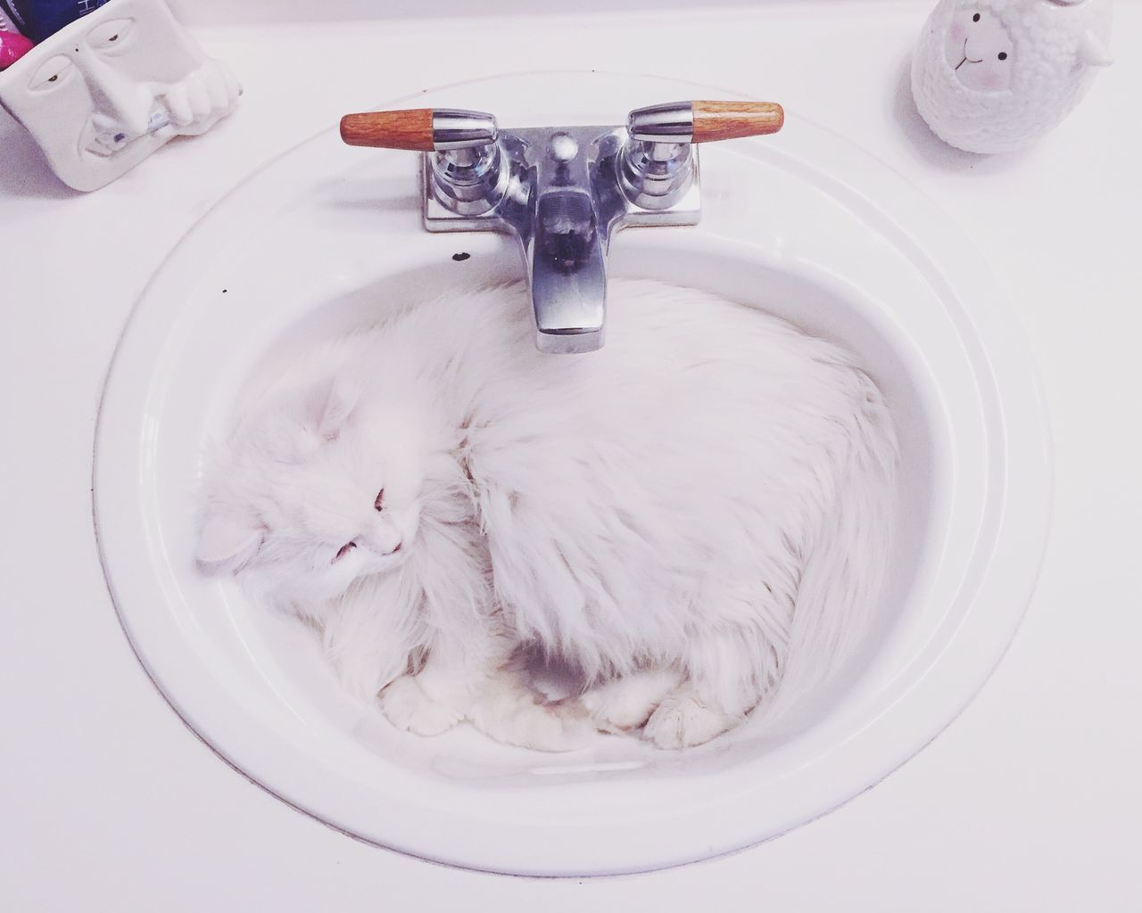 Beautiful stock photos of badezimmer,  Animal Themes,  Cat,  Curled Up,  Directly Above