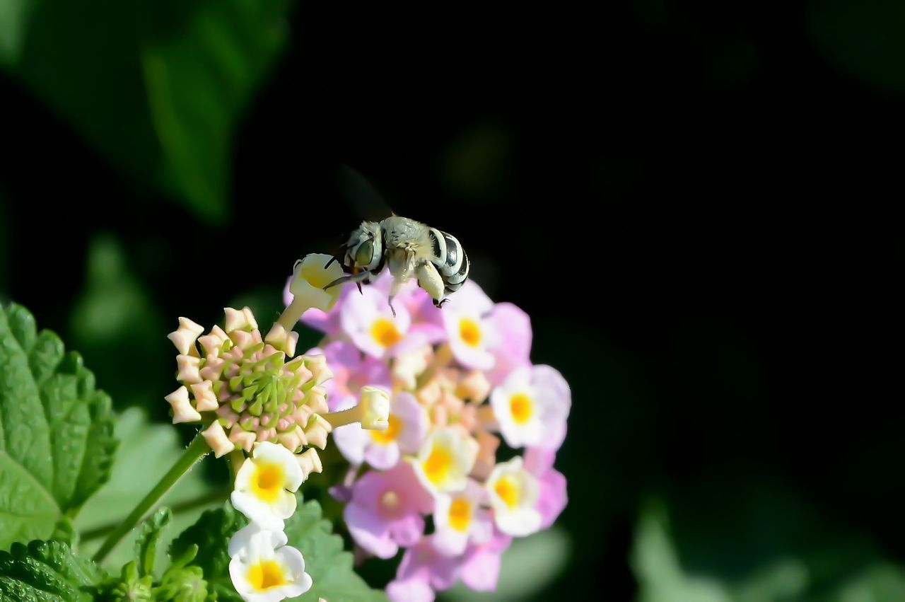 Bee 🐝 Animal Themes Animal Wildlife Animals In The Wild Beauty In Nature Close-up Day Flower Flower Head Fragility Freshness Insect Leaf Nature No People One Animal Petal