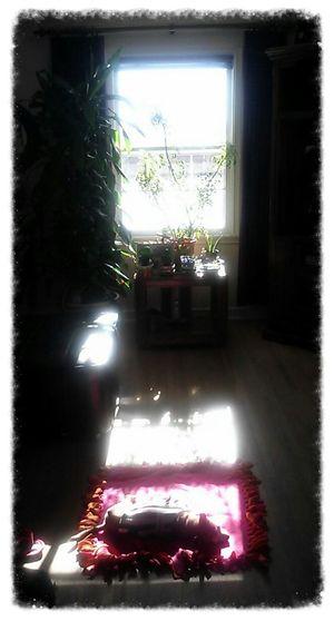 My Little Sunshine ♡ Layin' In The Sun. . .