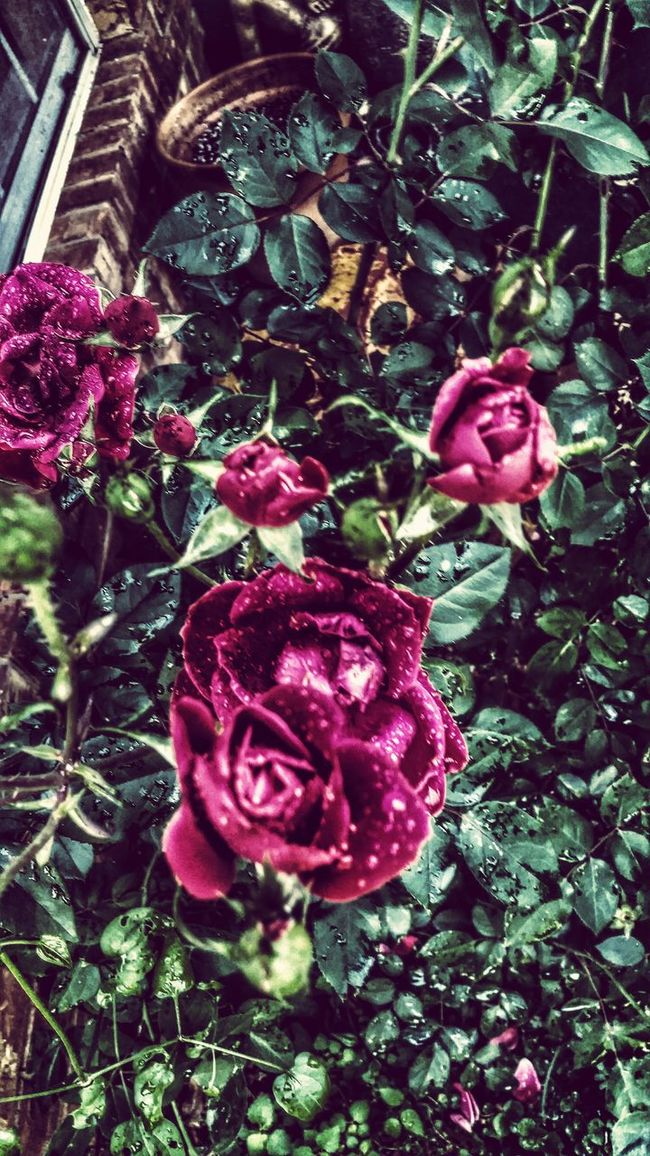 Fresh On Eyeem  Roses Are Red Detailphotography In My Mind's Eye