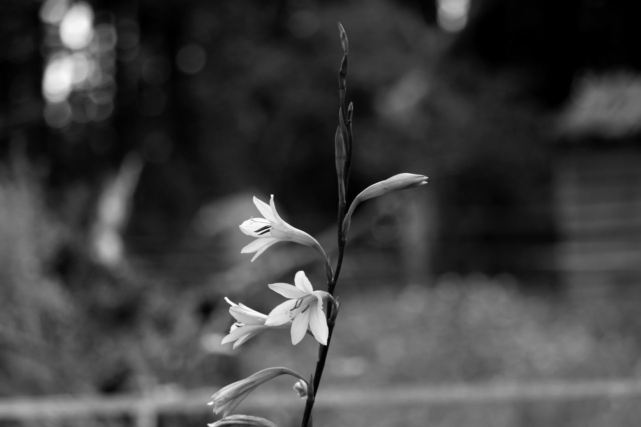 flower, petal, fragility, focus on foreground, nature, flower head, beauty in nature, growth, freshness, outdoors, plant, day, blooming, close-up, no people, water, snowdrop