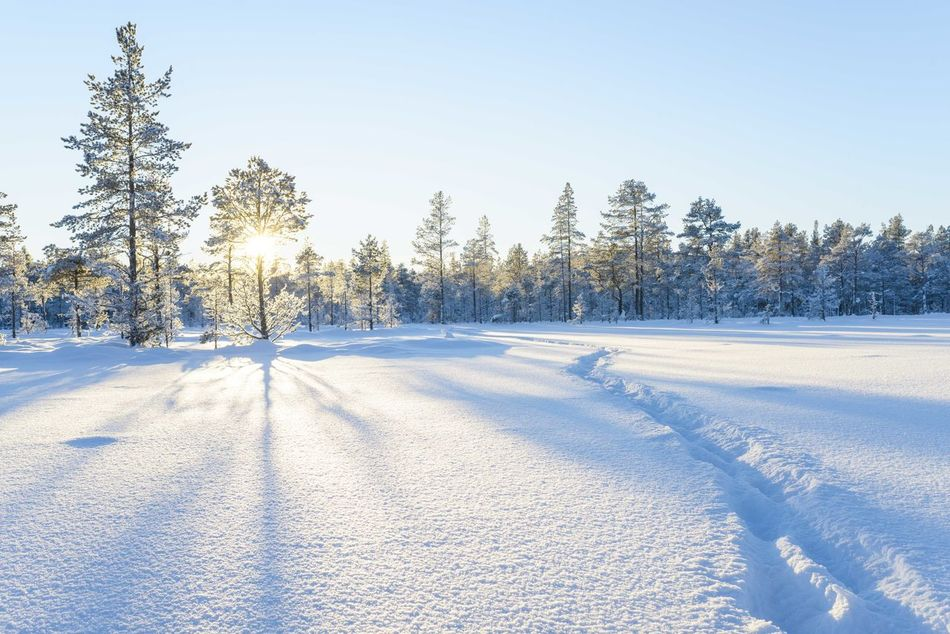 Beautiful stock photos of wald, Beauty In Nature, Clear Sky, Cold Temperature, Day
