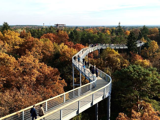 The Changing City the City is lost- Walk on top above the trees Landscape Bridge Lookingdown EyeEm Best Shots EyeEm Nature Lover Vertigo Nice Views Enjoying Life Autumn