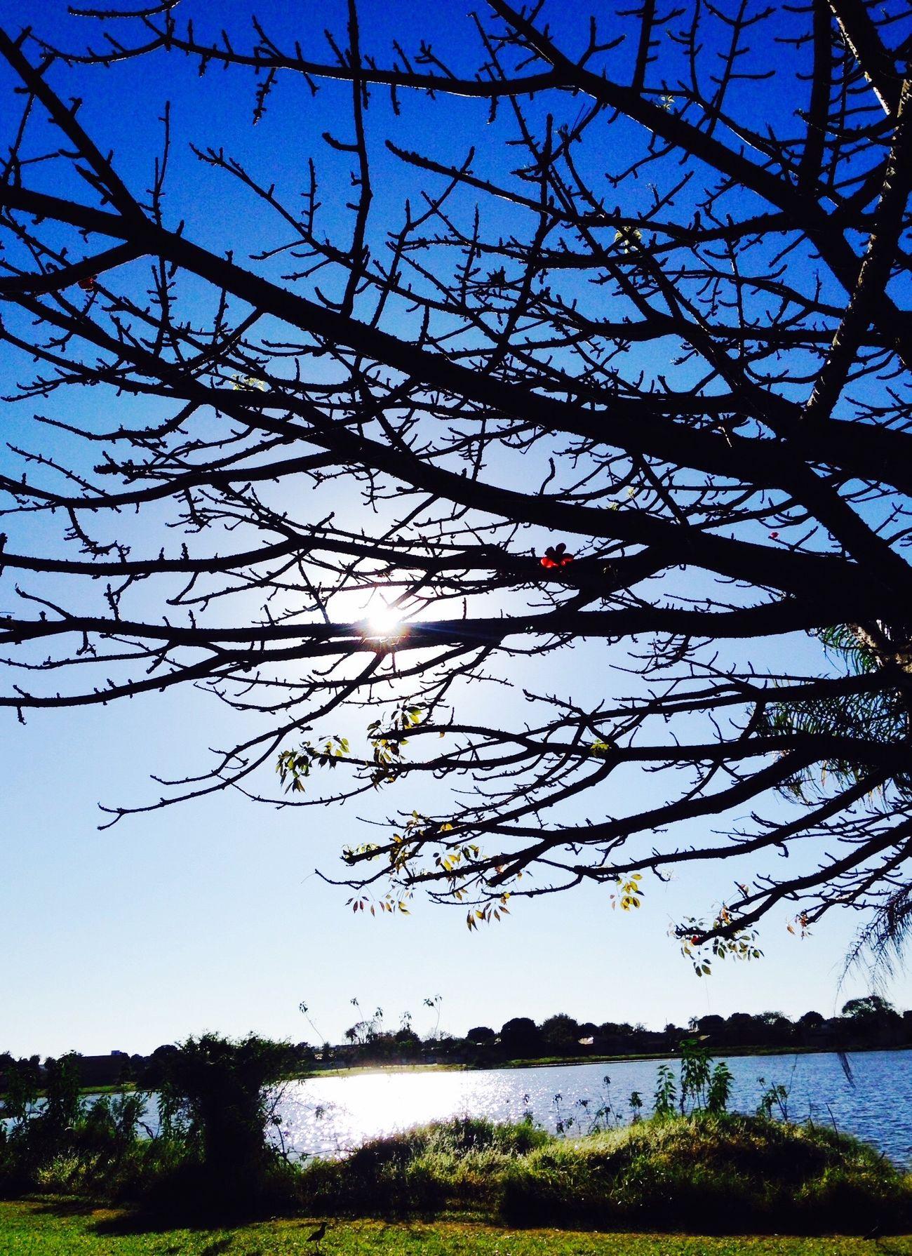 Tree Nature Lake Sky