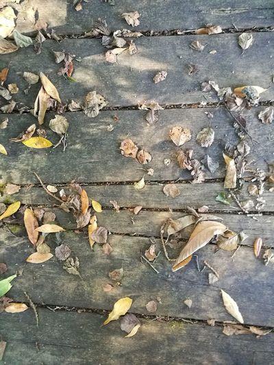 Unas simples hojas cubriendo unos tablones de madera producen una belleza de lugar