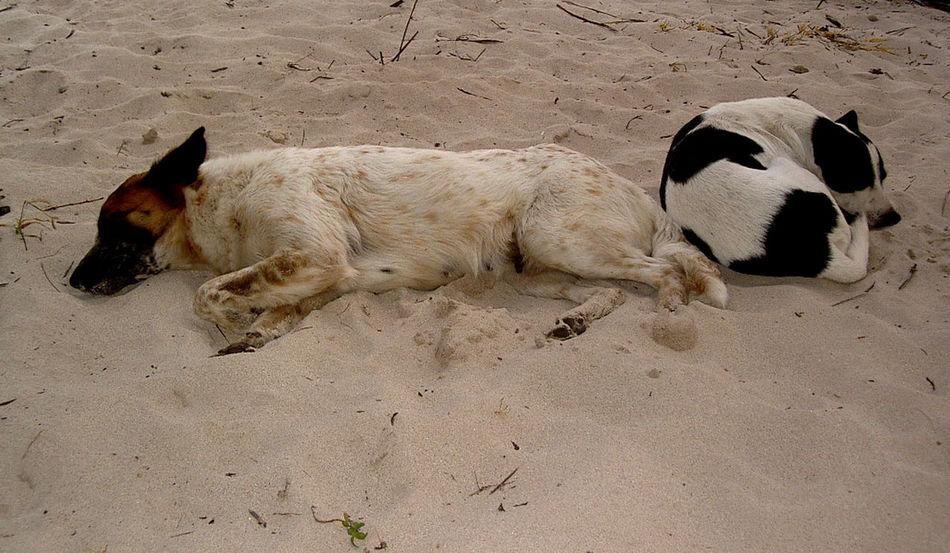 Mayan Ruins Traveling Tulum , Rivera Maya. Dogs SweetLe