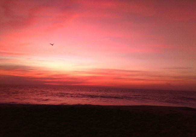 Colour Of Life Sunrise Atlantic Ocean Seabird