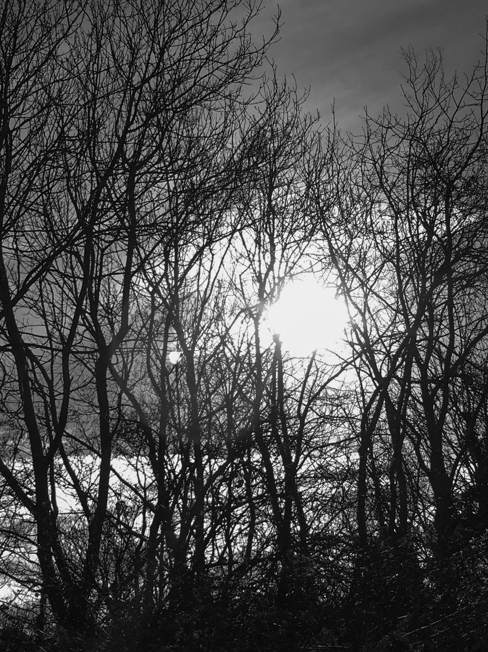 Tree Nature Sky Beauty In Nature Bare Tree Tranquility No People Low Angle View Branch Outdoors Scenics Silhouette Day Tranquil Scene Belfast Northern Ireland Cavehill Blackandwhite Blackandwhite Photography Monochrome Monochrome Photography EyeEm Best Shots EyeEm Black&white! EyeEm Nature Lover Eye4photography  First Eyeem Photo
