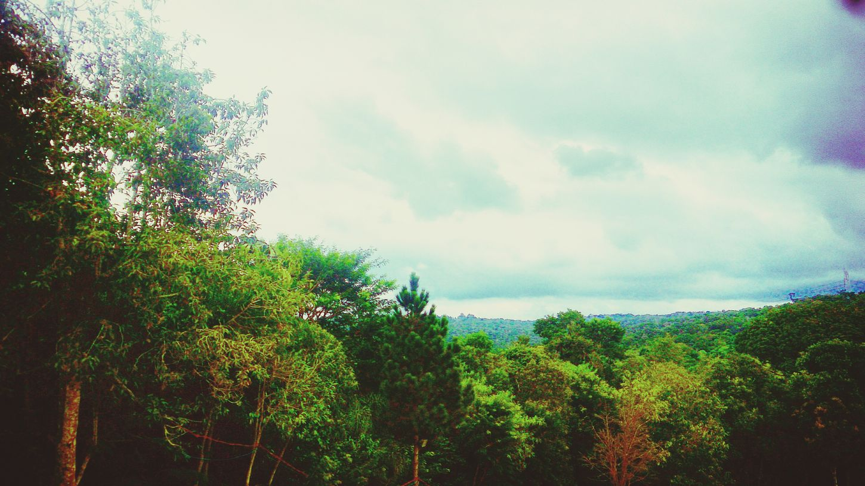 Natureza 🐦🌳 Arvores... 🌿❤
