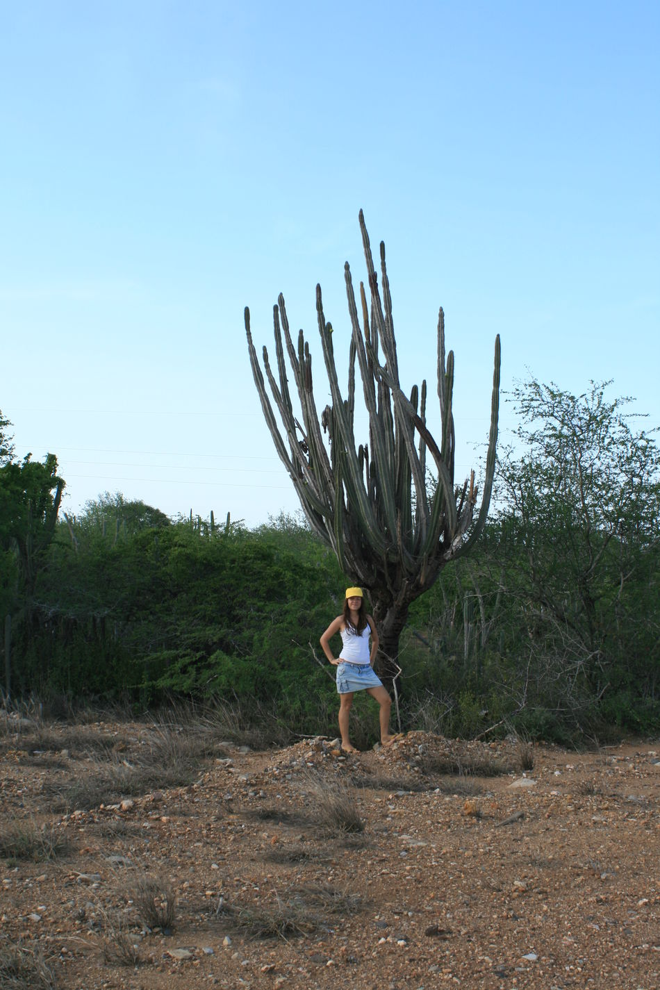 Big Cactus Cactus Casual Clothing Clear Sky Field Full Length Giant Cactus Landscape Leisure Activity Lifestyles Margarita Island Margarita, Venezuela Men Nature Rear View Sky Travel Travel Photography Traveling