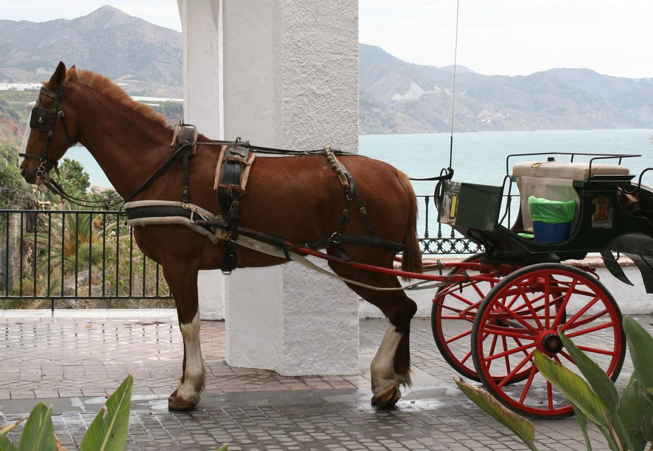 Horse-drawn carriage in Nerja waiting for Customers Animal Themes Carriage Carriage And Horses Carriage Ride Day Domestic Animals Horse Horse Cart Horse-drawn Horse-drawn Carriage Horse-drawn Cart Horse-drawn Vehicle Horsedrawn Mammal Mode Of Transport No People One Animal Outdoors Standing Transportation Travel Travel Destinations Travel Photography Travel The World Waiting