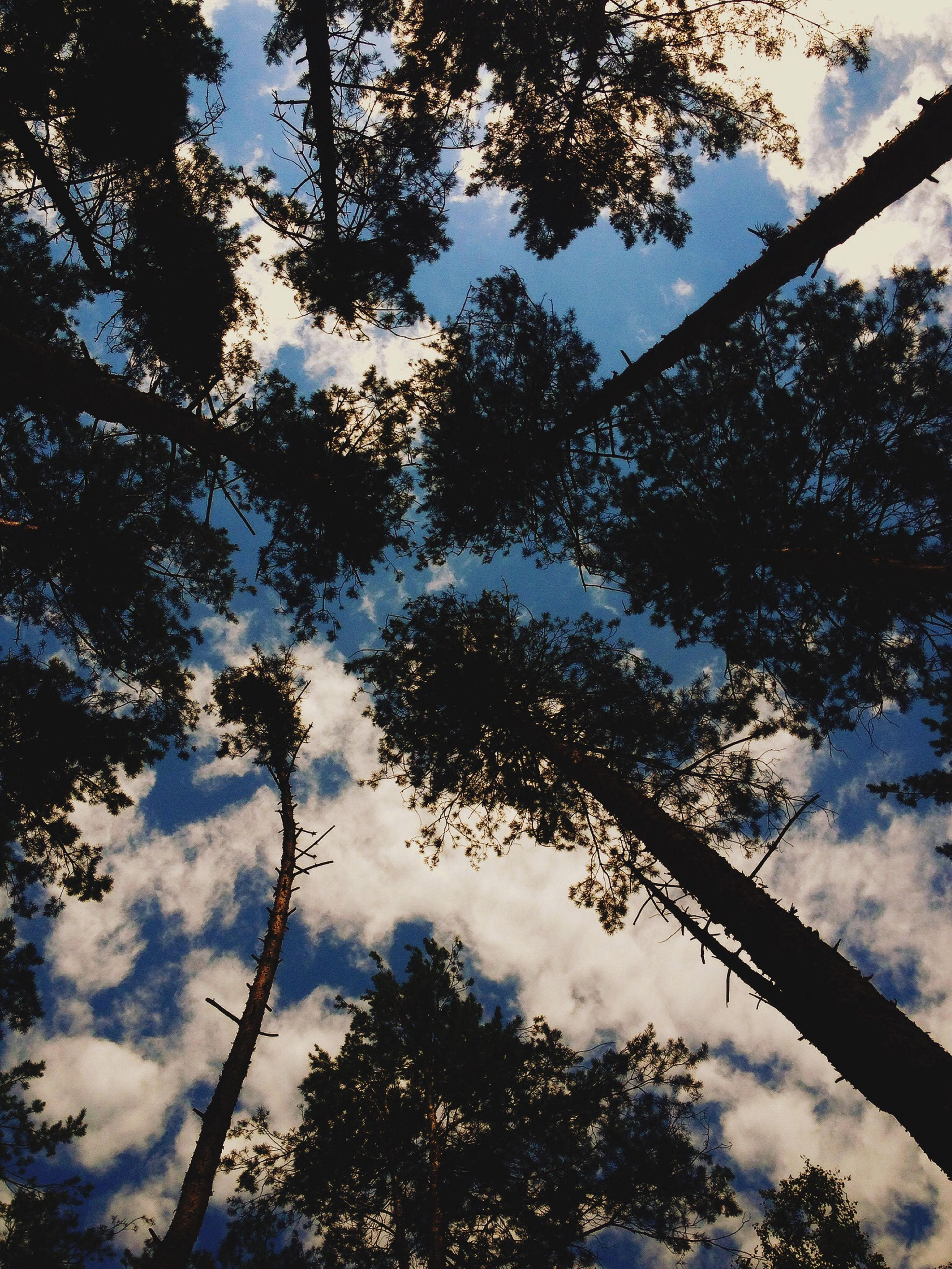 tree, low angle view, sky, cloud - sky, tranquility, nature, branch, beauty in nature, tranquil scene, cloud, scenics, cloudy, growth, silhouette, day, outdoors, no people, tree trunk, blue, reflection