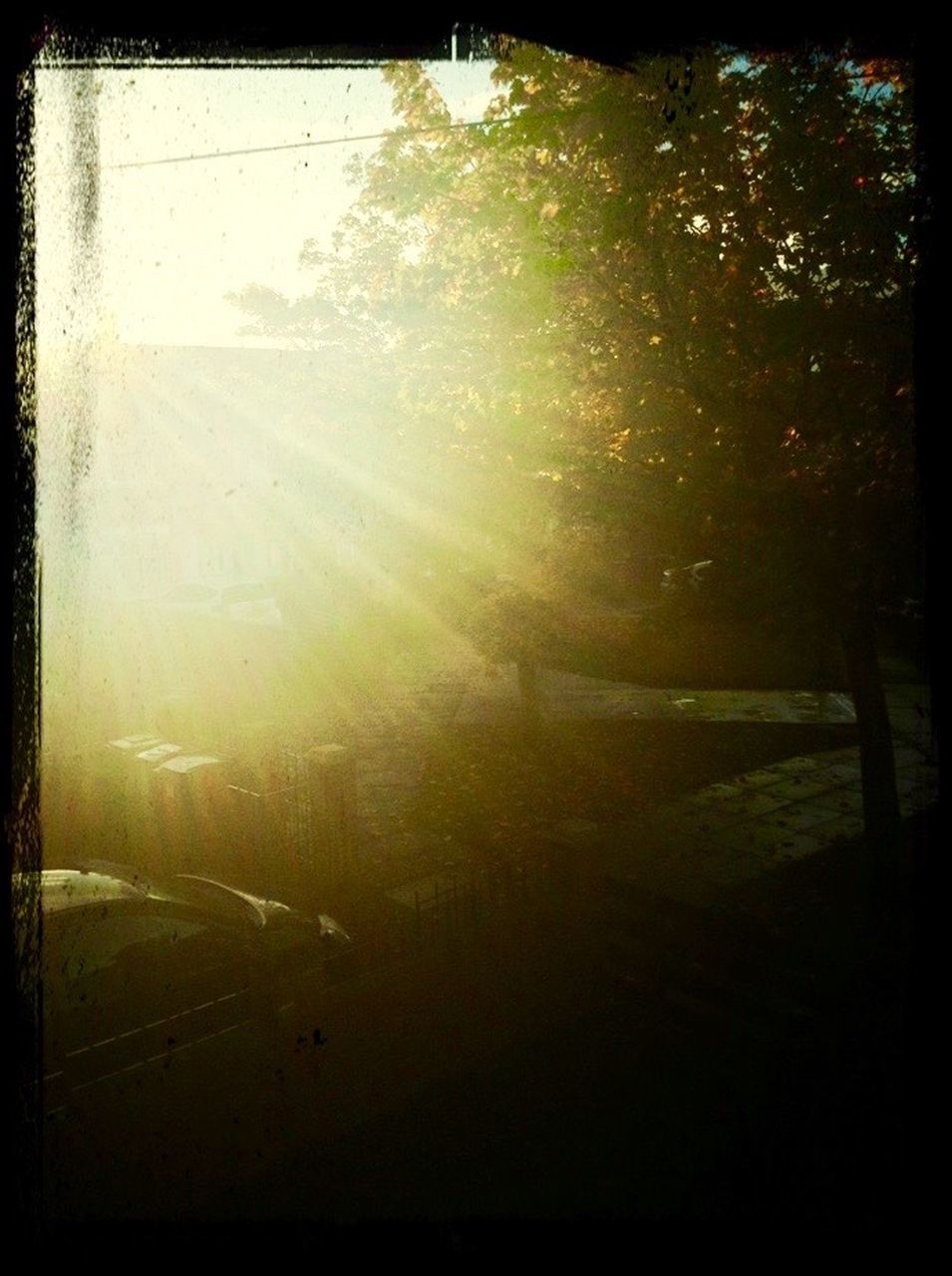 sunlight, tree, nature, no people, forest, day, outdoors, beauty in nature