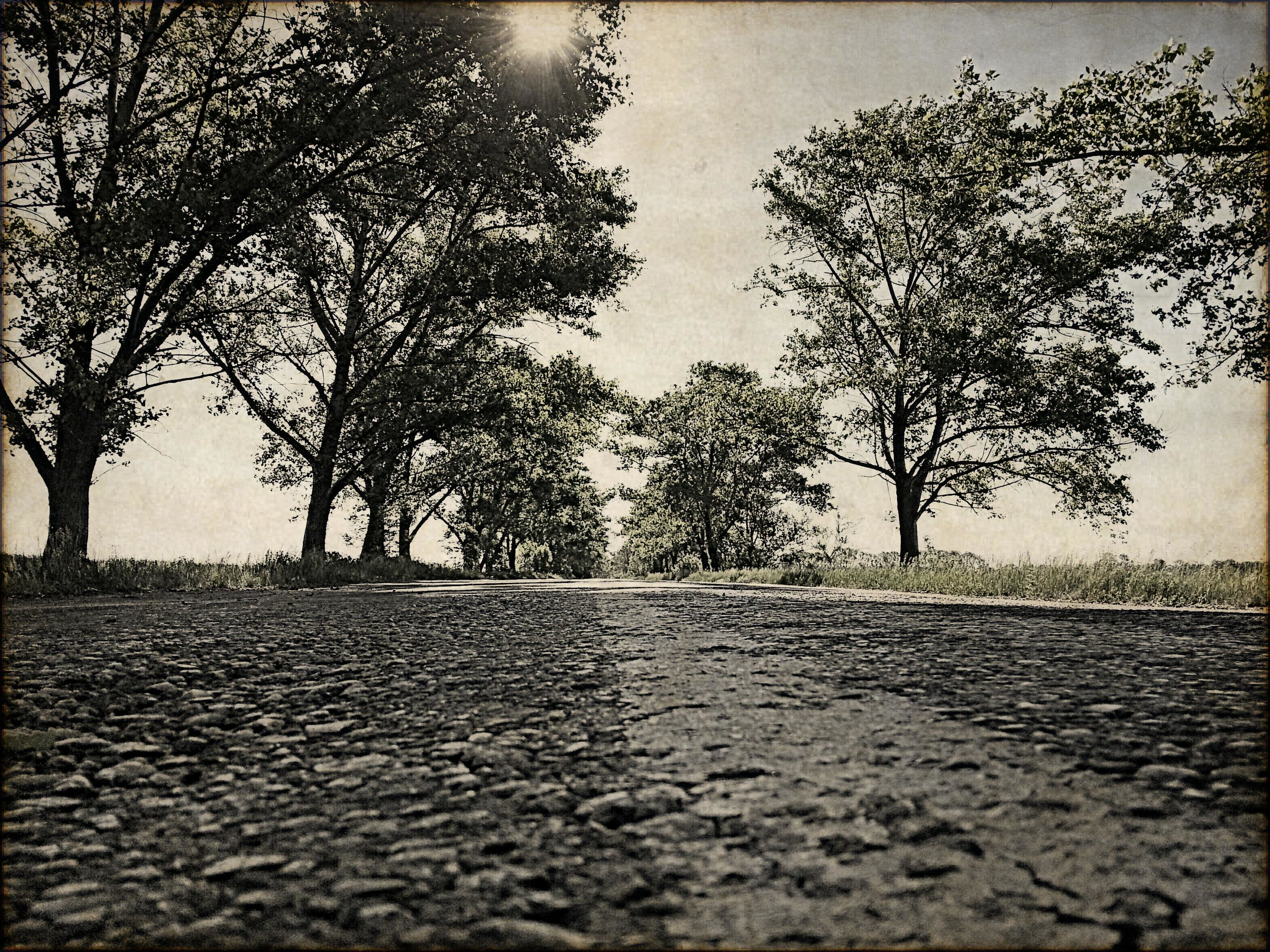 tree, bare tree, tranquility, branch, the way forward, nature, tranquil scene, street, road, footpath, silhouette, sunlight, sky, scenics, outdoors, shadow, no people, beauty in nature, tree trunk, growth