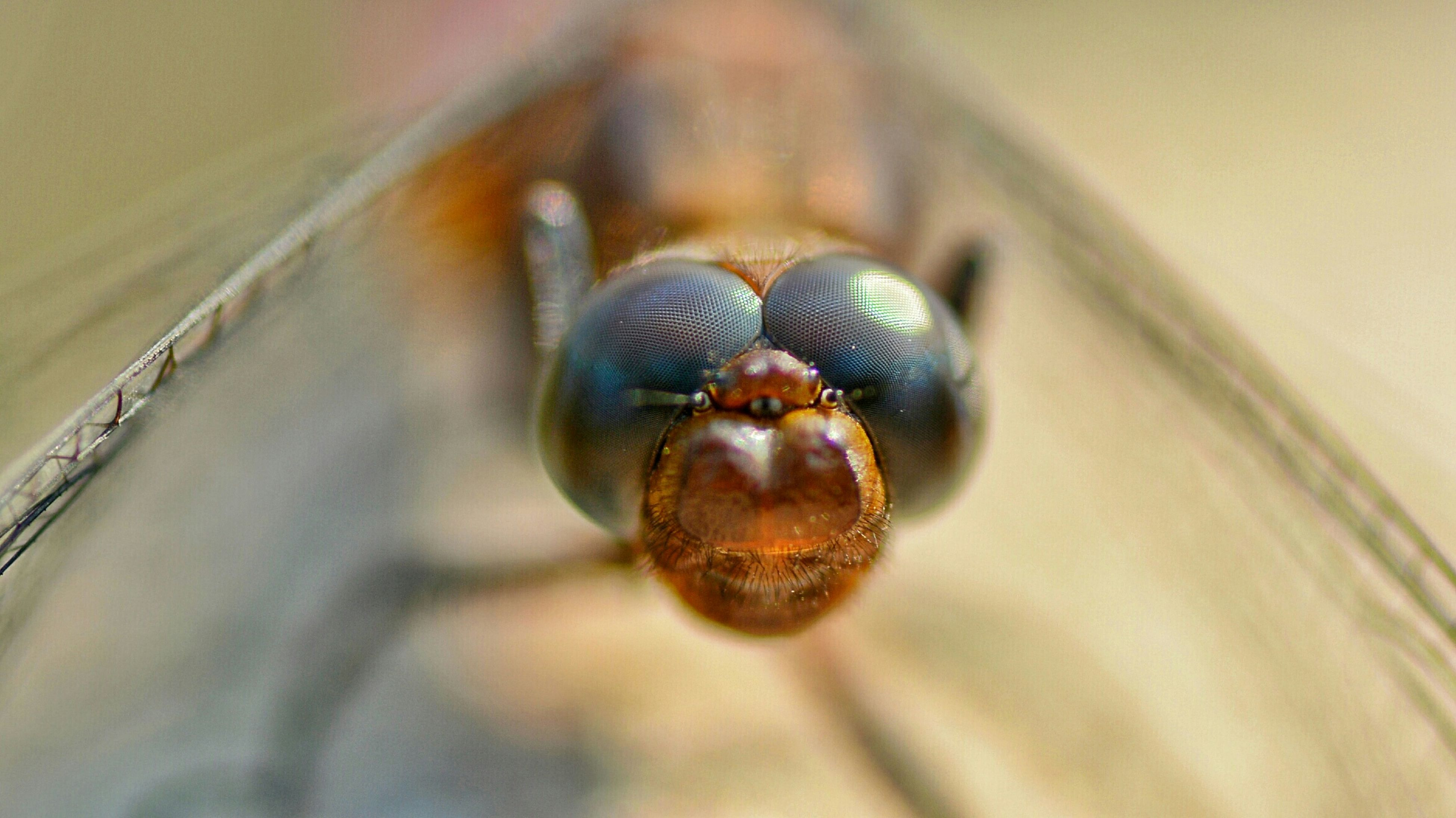 one animal, animal themes, close-up, insect, indoors, wildlife, animals in the wild, focus on foreground, selective focus, portrait, looking at camera, extreme close-up, animal body part, animal eye, macro, no people, animal head, zoology, day, extreme close up