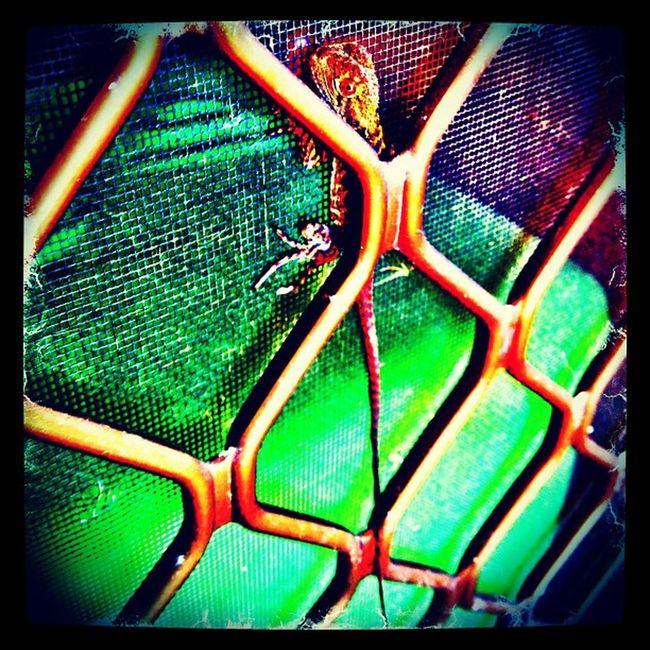 Shhhh!,I'm hiding! lol Babywaterdragon Lizard Camouflage