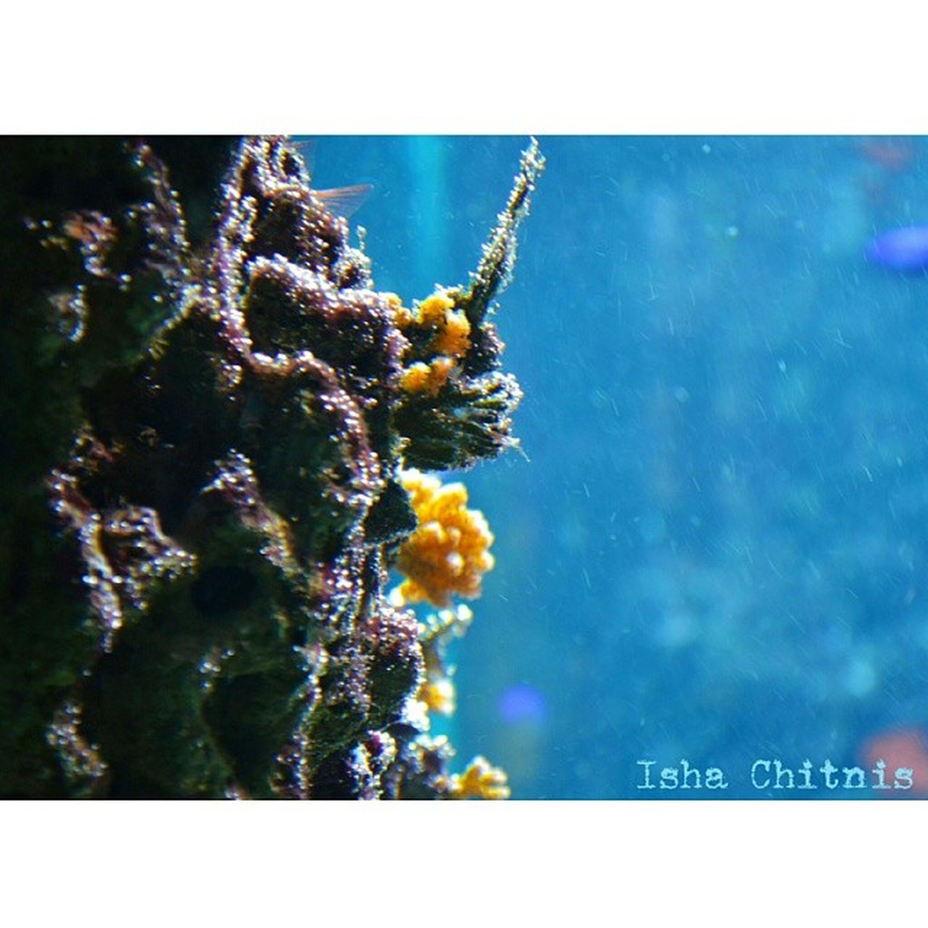 Blue!? Corals Blue Deepbluesee De instanature photography dslr