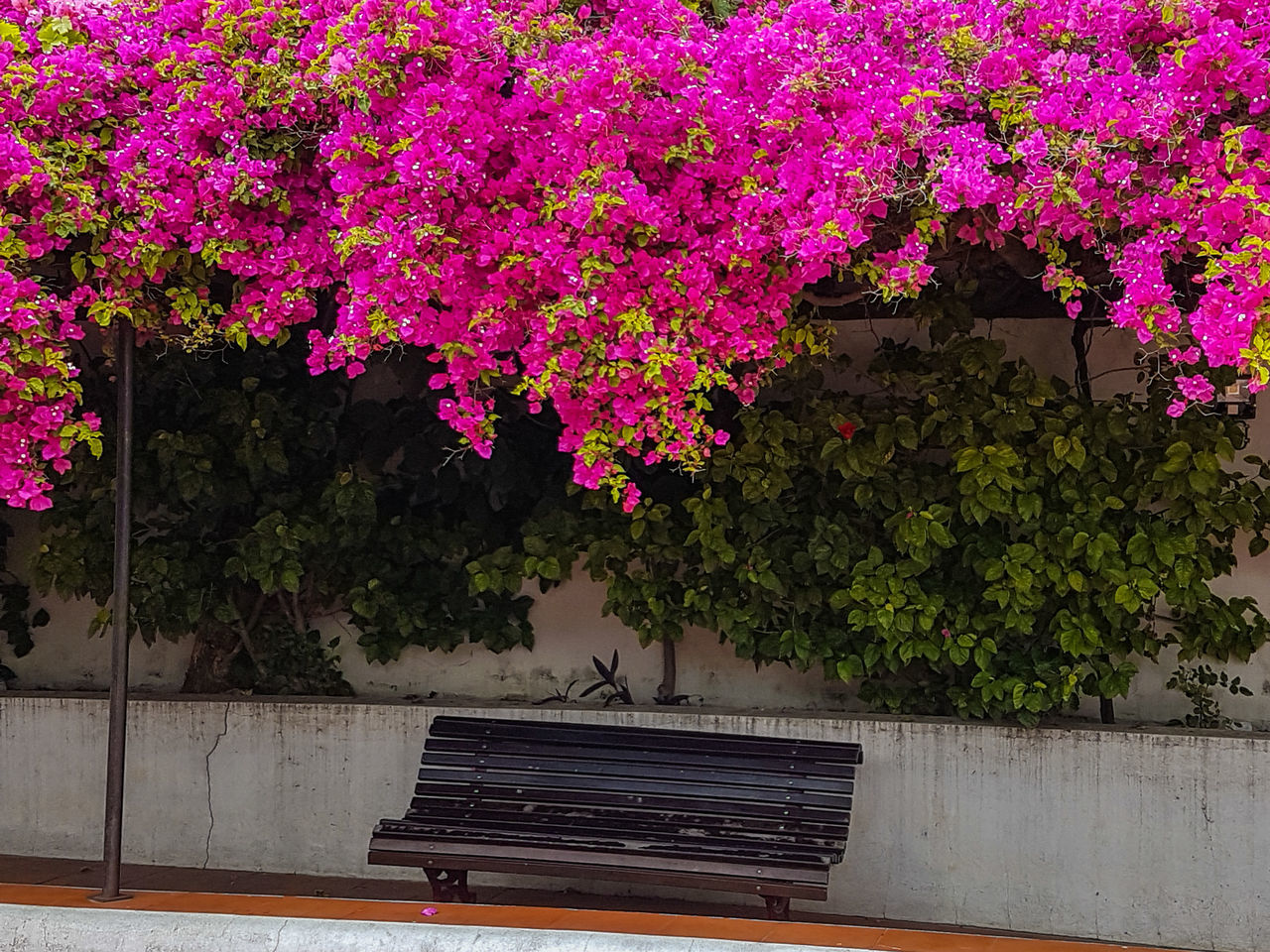 built structure, architecture, growth, flower, no people, building exterior, day, plant, pink color, outdoors, nature, tree, beauty in nature, freshness