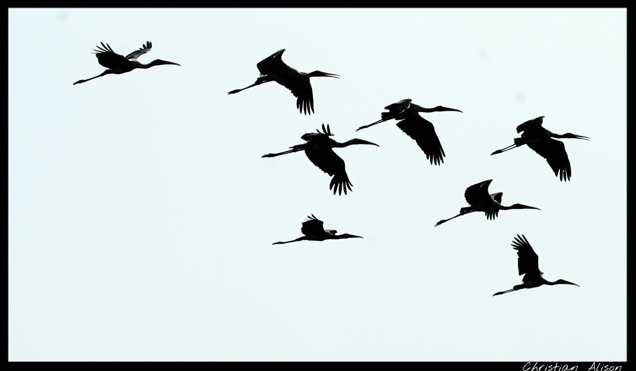 Bird Photography Happyness Birds Birdwatching Cool Beautiful Riverside Nature