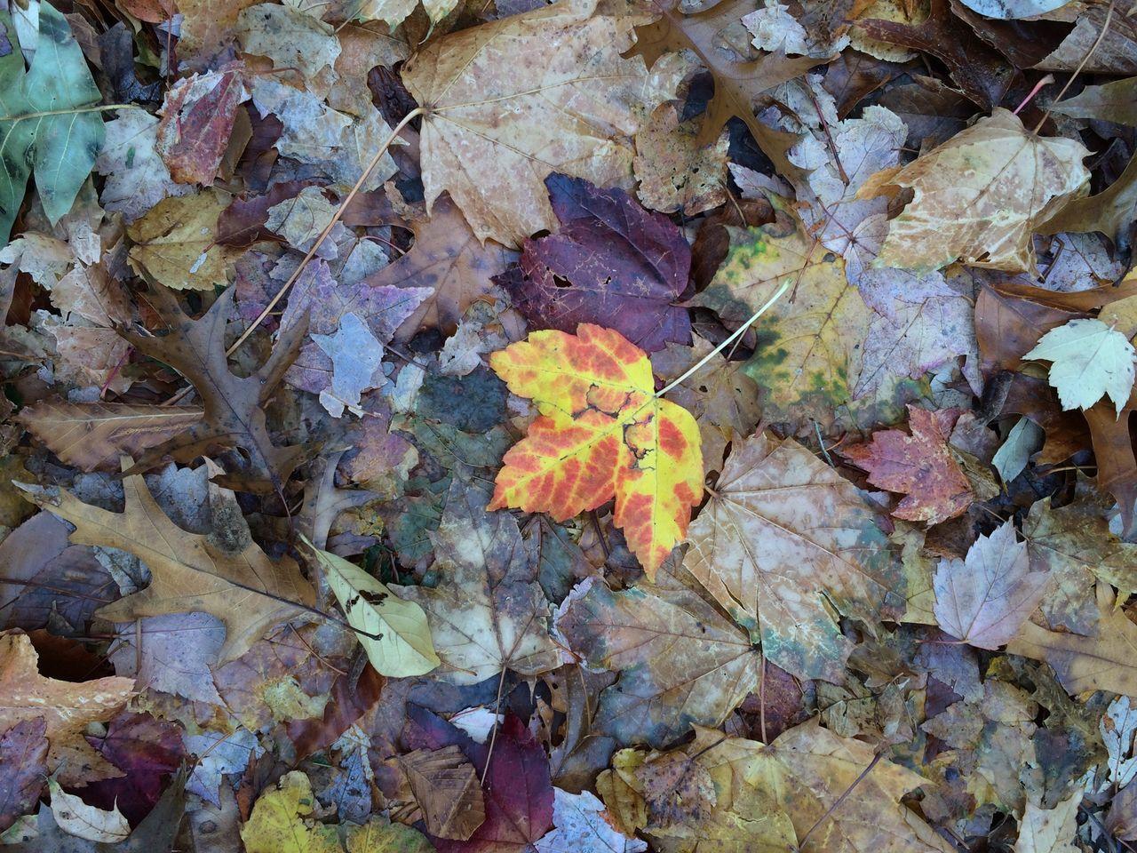 Full Frame Shot Of Autumn Leaves On Ground