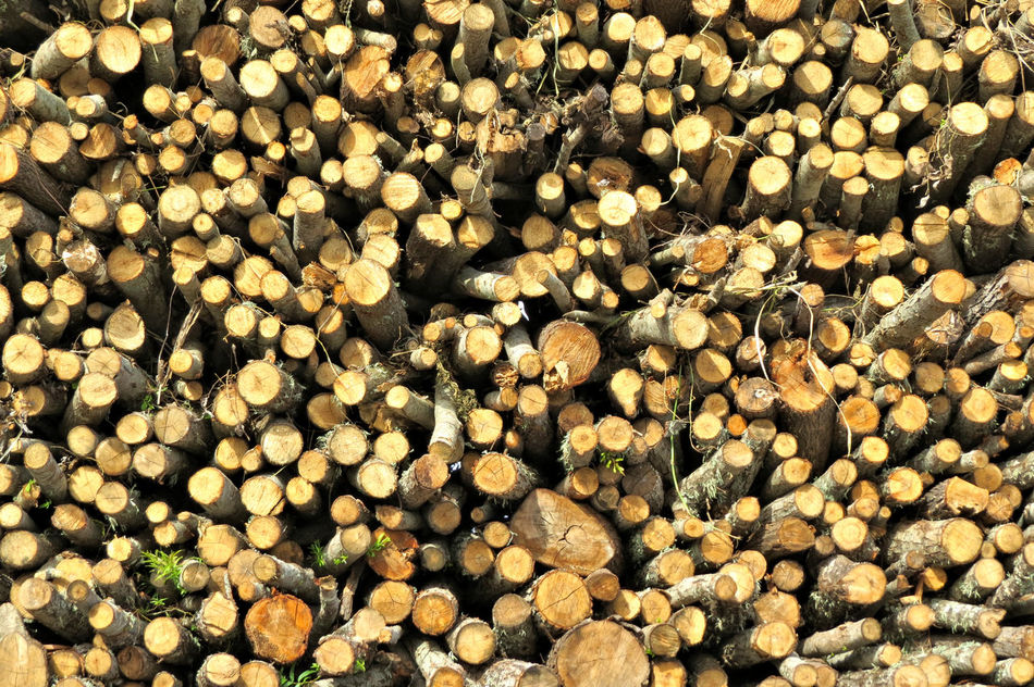 Abundance Backgrounds Close-up Day Full Frame Large Group Of Objects Nature No People Outdoors Trunk Wood Wood - Material