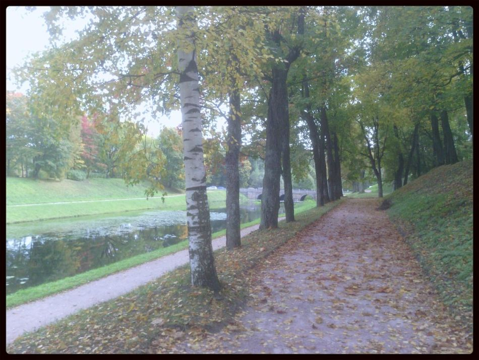 A Walk In The Park гатчина