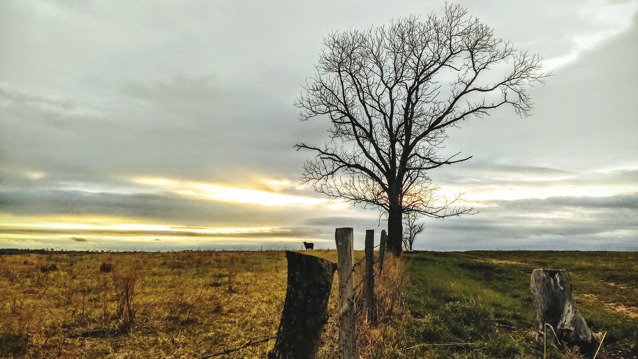 country living Nature Tree Outdoors Dramatic Sky Beauty In Nature Landscape Grass Cows Grazing