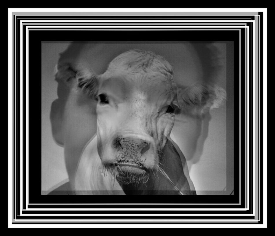 Cow_art You Are What You Eat Come On Humans Ugly People Make Beautiful Selfies https://youtu.be/SuIDGDL1Q18 Better Look Twice