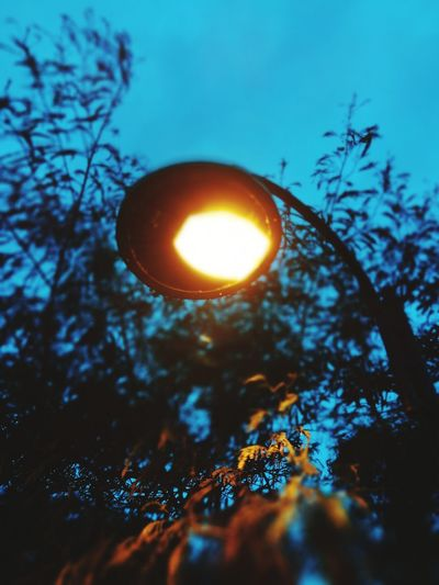 Tree Nature No People Landscape Moon Winter Night Forest Branch Sky Outdoors Bare Tree Beauty In Nature Clear Sky Close-up lamp post