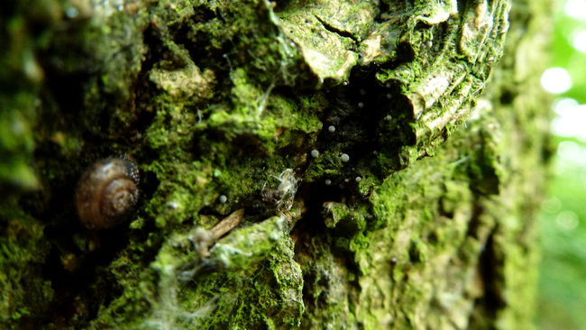 Bark Beauty In Nature Close-up Day Detail Fungus Green Color Growth Microcosm Moss Nature No People Outdoors Selective Focus Snail Tree Trunk